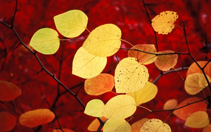 Leave Autumn background for desktop