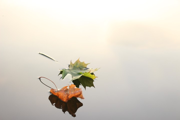 Leaves, Water, Reflection, Calm