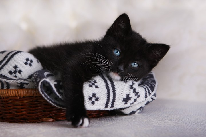 Black Kitten Wallpaper By Elirogers Revelwallpapers Net