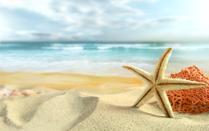 Beautiful starfish On The Sandy Beach Holiday Concept