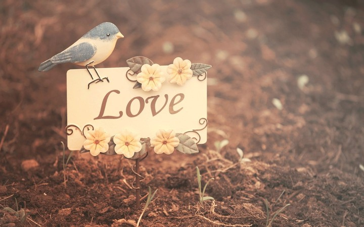 mood-bird-love-flowers-photo-wallpaper
