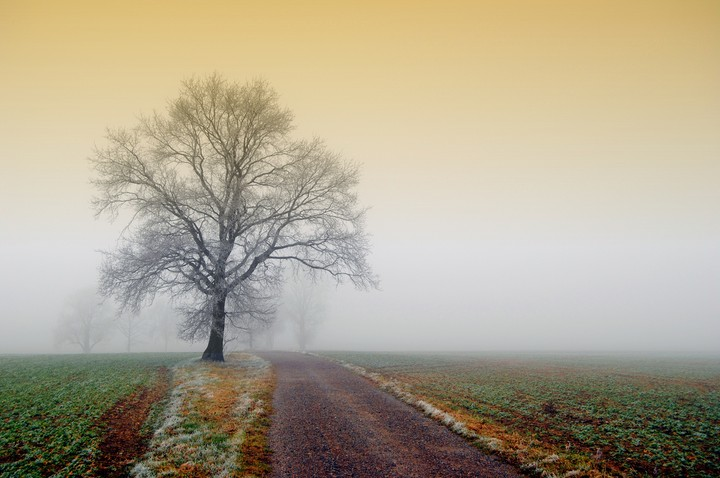 Fall Landscape, fog, village Road
