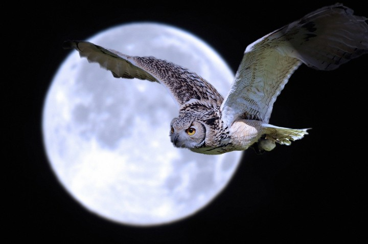 Owl And Full Moon In A Dark Night