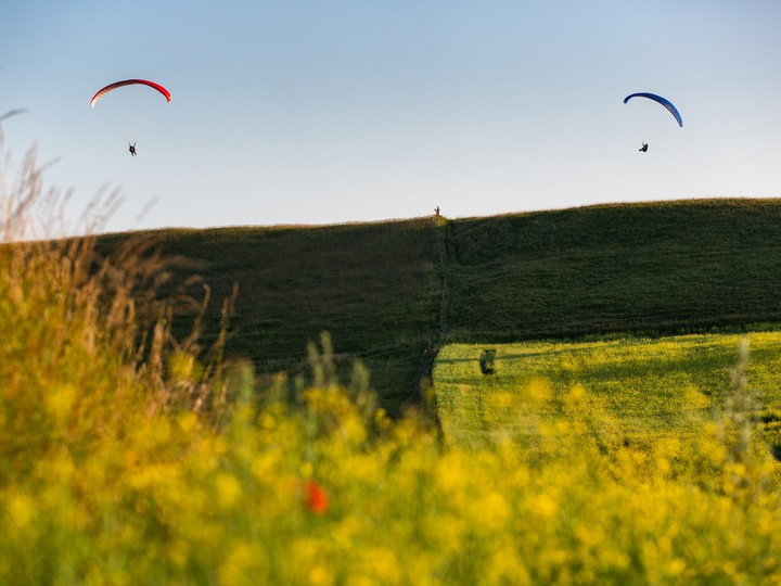 Paragliders In The Air Inside Yellow Flowers