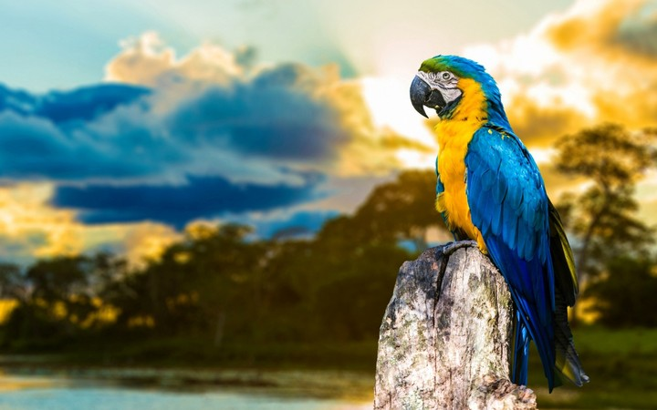 Blue and yellow parrot perched on a tree stump