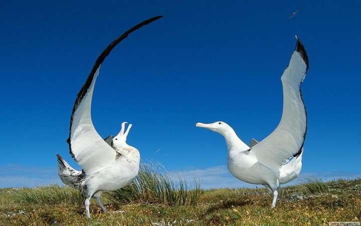 Couple Seagull In Spring