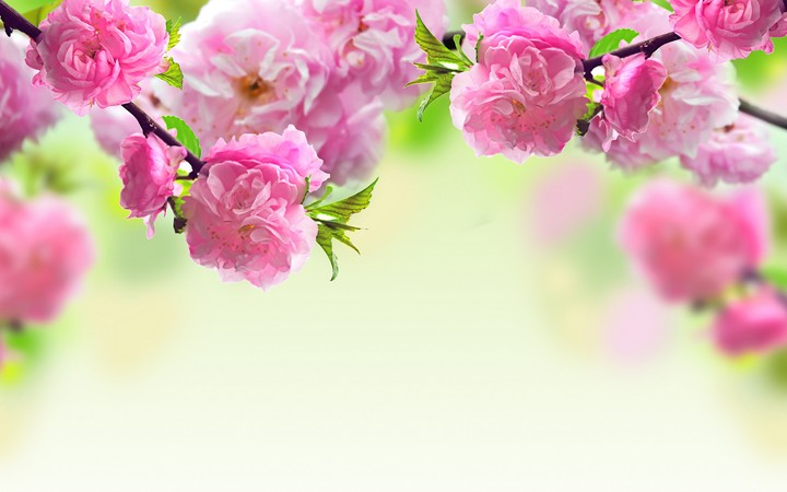 обои на рабочий стол цветы