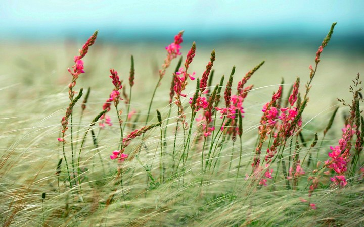 Pink Wild Flowers In The Grass Field