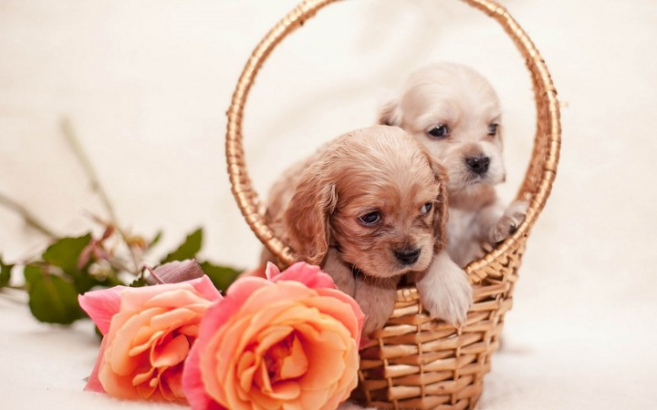Puppies In Basket Flowers