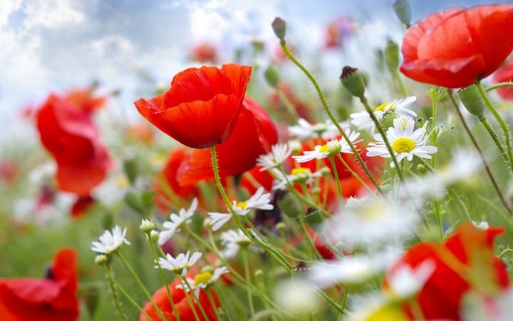 обои для рабочего стола природа цветы № 509955  скачать