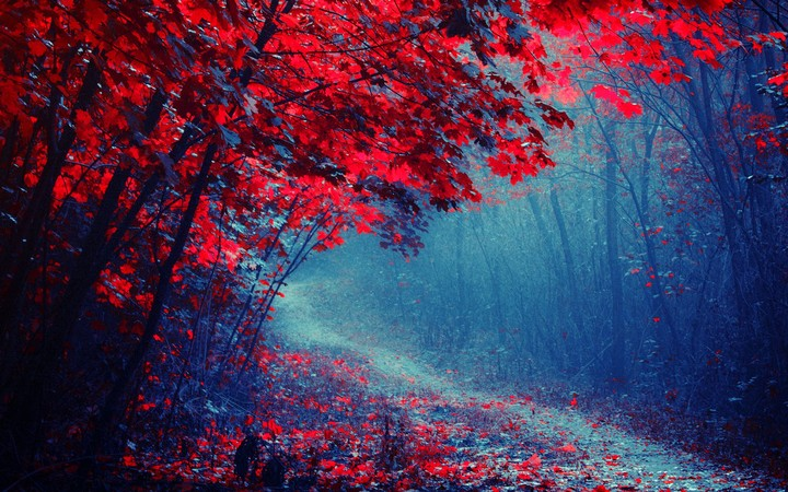 Beautiful Scene Misty Old Autumn Forest Wallpaper By