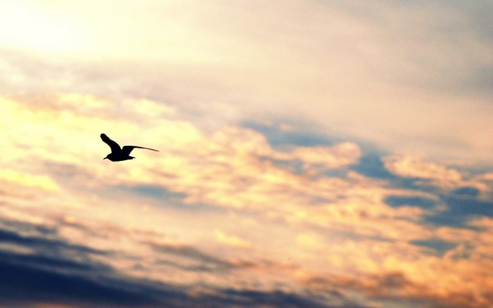 Seagull With Sunset At Bang Pu Beach Thailand