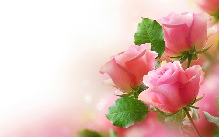 Rose Woman Day Wallpaper By Marijane Revelwallpapersnet