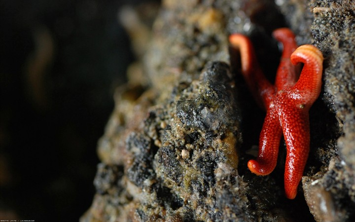 Red Starfish On A Rock In A Beach