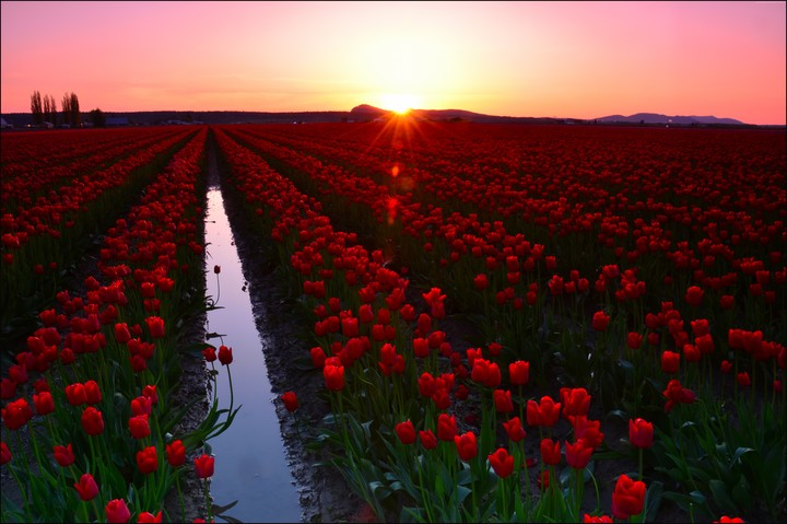 Skagit Valley,Washington, Usa