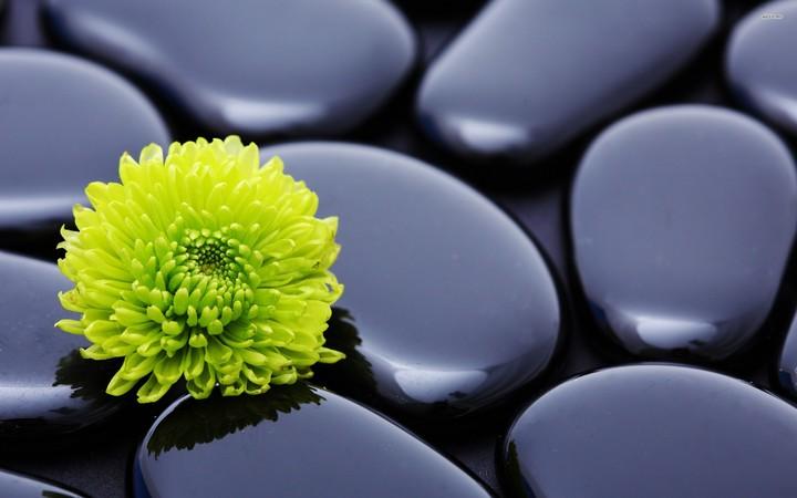 Spa Green Dahlia And Zen Stones Wallpaper By Billgate