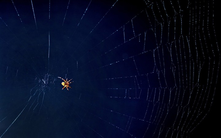Spider On A Web Background