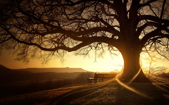 Sunset Old Tree Chair Sad Landscape Hd wallpaper by hunterTami    RevelWallpapers.net