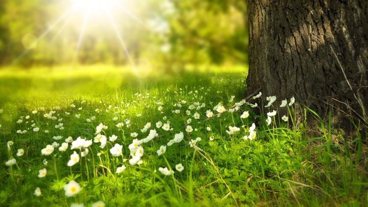 Kết quả hình ảnh cho sunshine on wild flowers