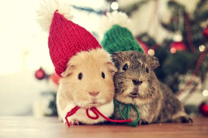 Sweet Christmas Animals Cute Winter Cold Cozy Couple Holiday Mouse ...