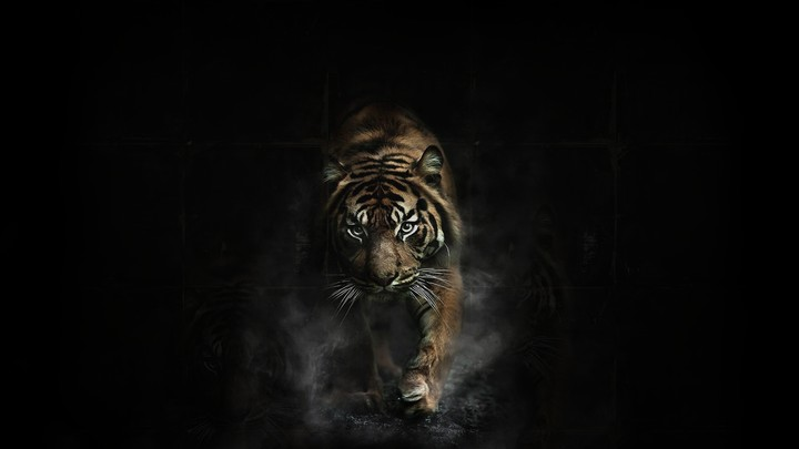 Tiger In Black Background