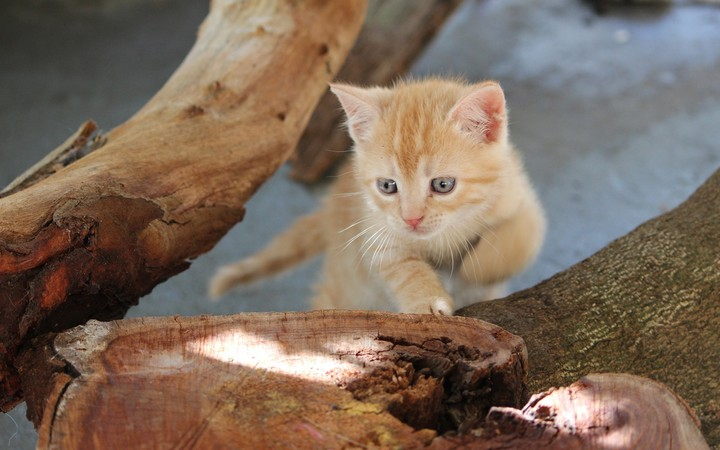Kitten on Tree Stump