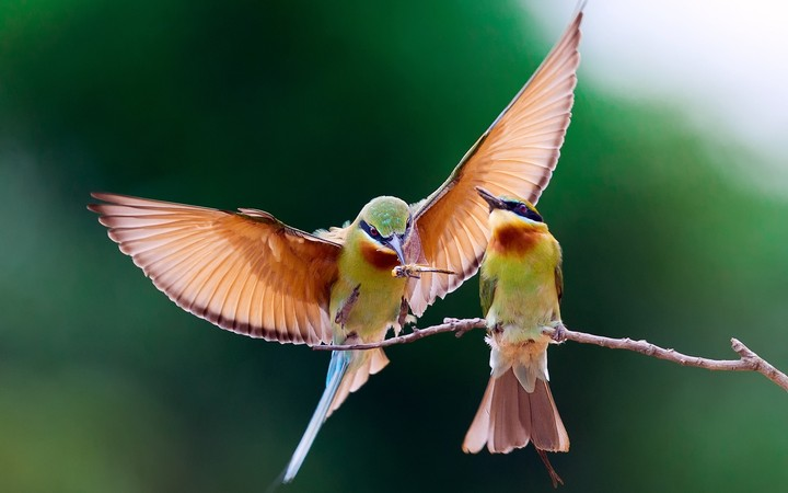 Two Birds Eat Insects