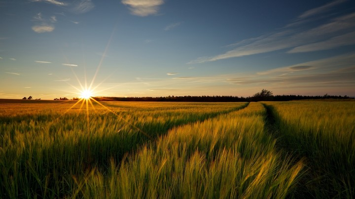 Rural Countryside With Wheat Field And Sunrise
