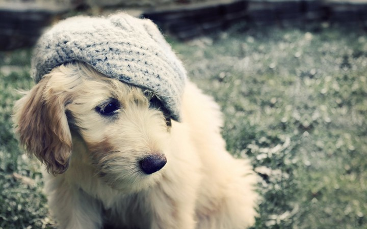 White Puppy Hat