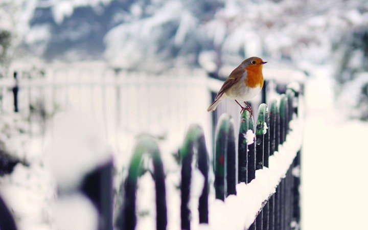 alone Bird sitting on a iron fence in the winter