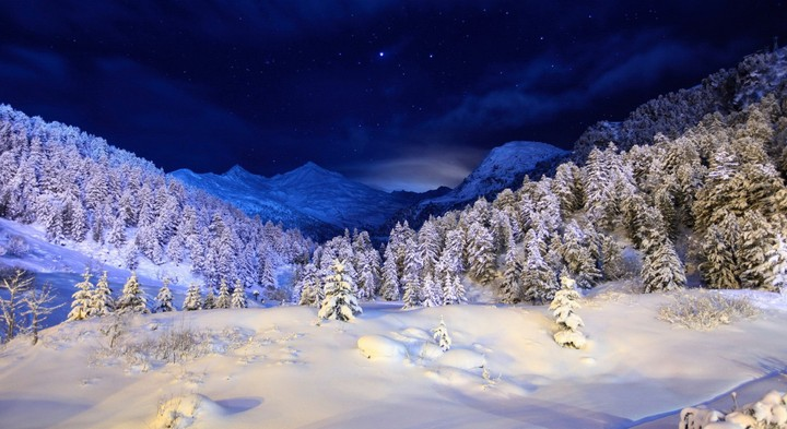 Winter Snow Cover Night Light Trees Coniferous Stars Dark Blue White