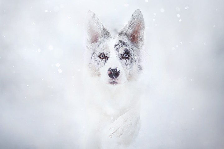 Winter, Snow, Paw, Dog